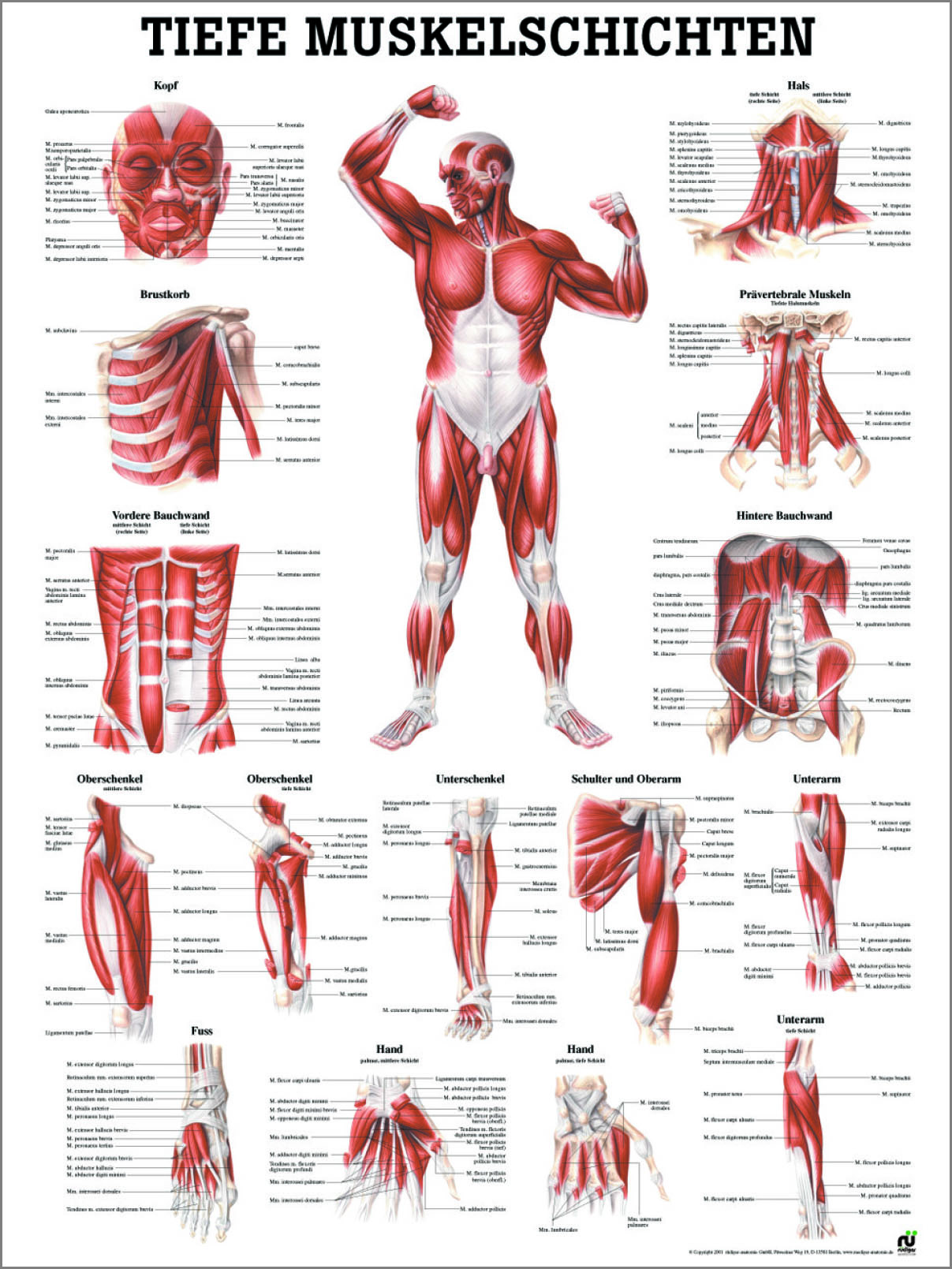 Schön Muskelanatomie Der Hand Fotos - Anatomie Ideen - finotti.info