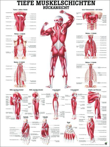 Lehrtafel Tiefe Muskelschichten (hinten)