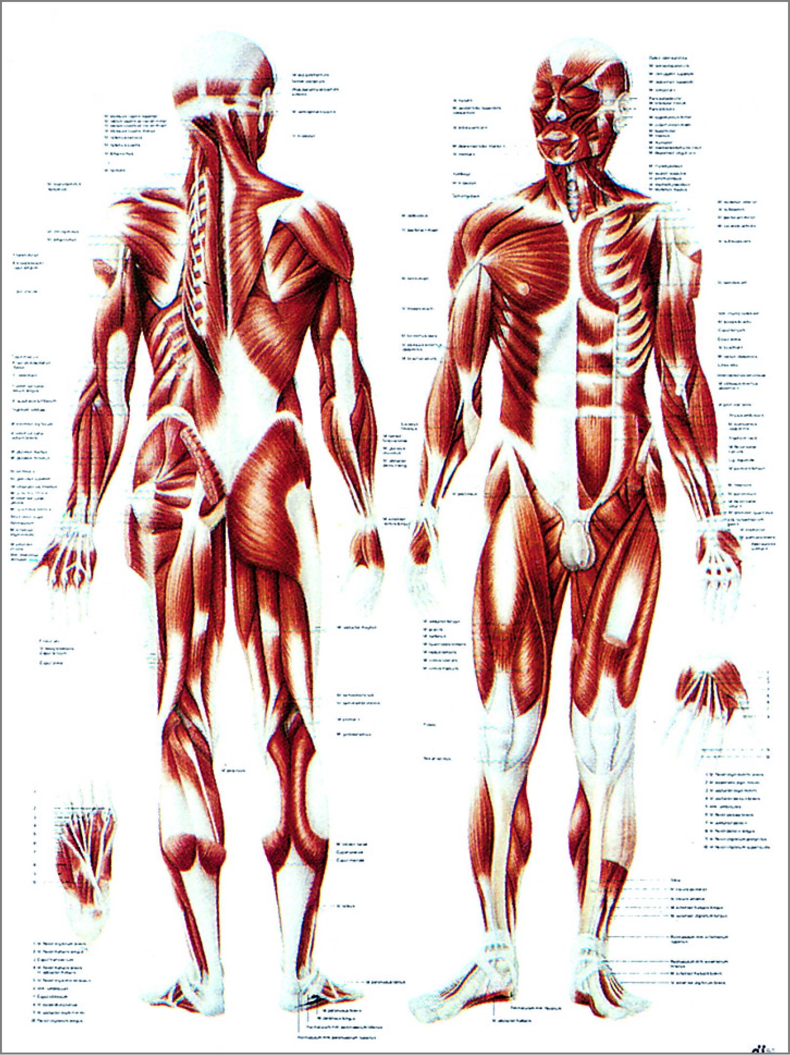 Tolle Menschliche Anatomie Zeichnung Praxis Fotos - Anatomie Von ...
